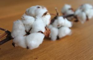 Vlákna bavlny