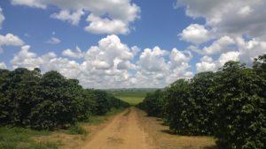 Kávovníková farma